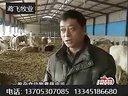 青贮秸秆饲料氨化肉牛饲养技术视频