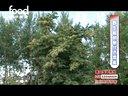 东北黑蜂01视频