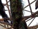 孔雀种鸟188金宝博官方直营网