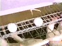养鸡技术集(夏季肉鸡和蛋鸡高产饲养管理技术3_上集)_clip(1)
