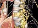 第02讲 用三维立体模型学习人体解剖学  预览版  中医推拿视频教学