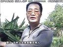 珠江台摇钱树栏目介绍种植红肉紫心火龙果_高清视频