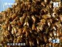 【猴子派】解密:非洲杀人蜂视频