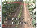 叶面肥增力蛋白水溶肥可冲施滴灌力增农业葡萄种植技术视频