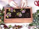 用盒子制作多肉植物组合盆栽【醉花网】视频
