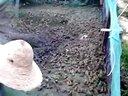 浙江长兴创意生态农业发展有限公司青蛙养殖基地视频