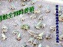 谊兴黑斑蛙(青蛙)特种养殖驯化基地视频