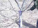 春季核桃树修剪2010年2月视频