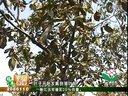 农家四季《核桃树现在如何修剪》_MPEG视频