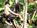 老虎泰拳馆教练踢腿砍倒香蕉树