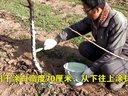 大樱桃冬季防冻措施视频
