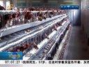 受H7N9疫情影响畜禽养殖业陷入低谷期[早安山东]
