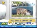 大学生骑车遭撞死  宠物狗5年不离现场[说天下]