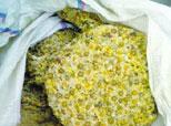 专家教你三招辨硫磺菊花
