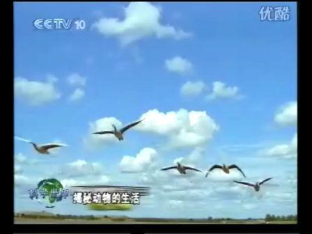 800x800 列队飞行的大雁风景图片