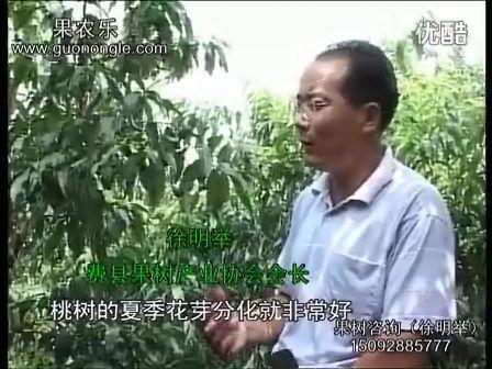 桃树夏季修剪技术