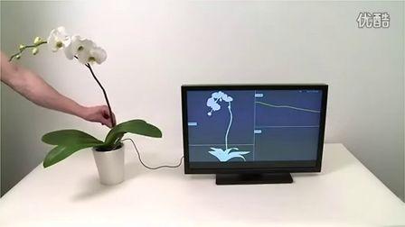 有趣的植物交互技术演示