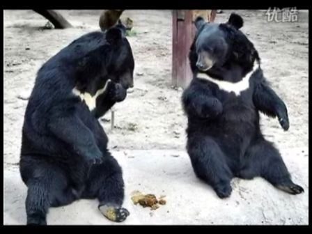 动物也幽默