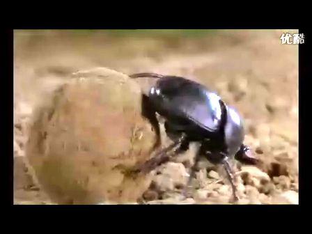 [皇者]探索发现和动物世界高清hd视频
