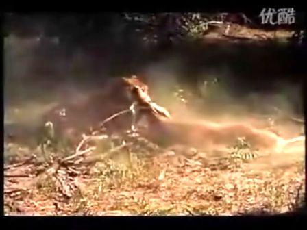 猎豹动物素描图片