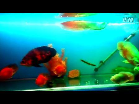 银龙鱼和什么鱼混养最好怎么搭配条数图片