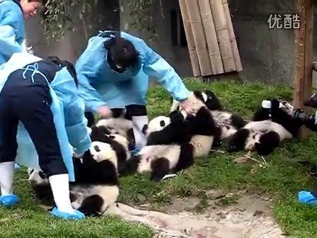 母熊猫果然表情帝:超可爱女性熊猫人萌表情