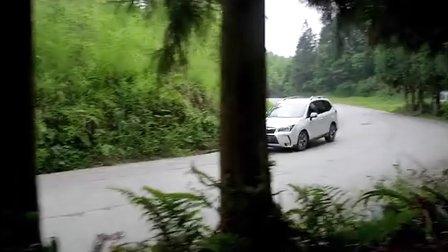 31座森林熊猫TVC-最终