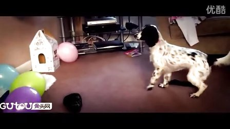 快看快看,狗狗玩气球嗨翻了(转载)
