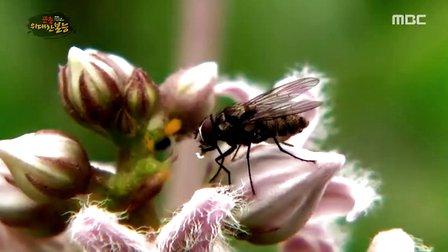 곤충, 위대한 본능