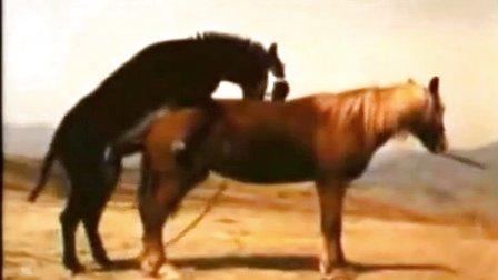 动物世界性行为驴马交配