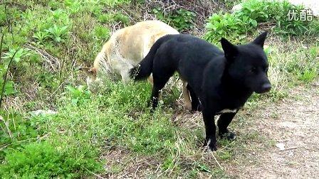 人与交狗配图片图图-有日过狗的吗 狗狗小白