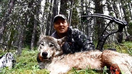 【唐装野人】美国大叔野外复合弓狩猎野狼