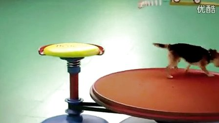 超有創意的寵物多米諾骨牌!贊爆了