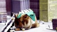 小仓鼠变大怪兽,一点都不可怕啊。。。