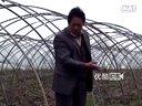 拍客;老汉种植30万斤大蒜无销路被家人赶出家门