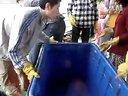 上海莘庄放生护生群2013年5月26日上船放生花鲢鲫鱼河蚌视频