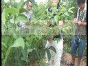 邓州市春伟核桃苗种植核桃嫁接核桃果园核桃树培训课程1视频