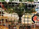 圣缘景观-仿真树工程案例-仿真海枣树、仿真大王椰子树、仿真三角梅视频