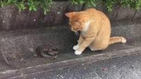 貓: 咦, 有跟繩子還會動? 蛇: 今天出門沒看黃歷