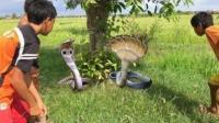 柬埔寨的小孩為什么動不動就抓蛇抓魚吃, 原因卻是這樣!