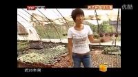 北京百花仙子园多肉植物北京最大的种植基地央视采访视频