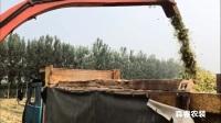 青貯飼料收獲機小麥、玉米、棉稈、皇竹草實地收割視頻演示