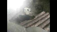 【北京動物園2017年6月20日】 用視頻記錄下我們的點點滴滴