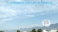 宏翔公棚9月1日第七站50公里訓放歸巢視頻(手機拍攝)